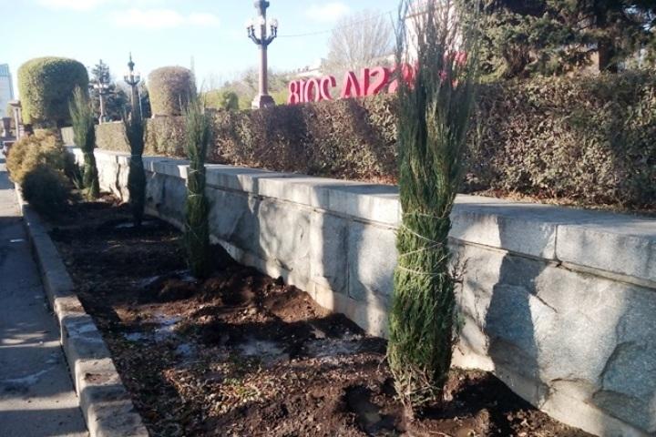 НаЦентральной набережной Волгограда посадили 36 кустов можжевельника