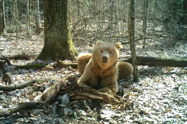 ВСовете Федерации показали фото брянского медведя Арсения
