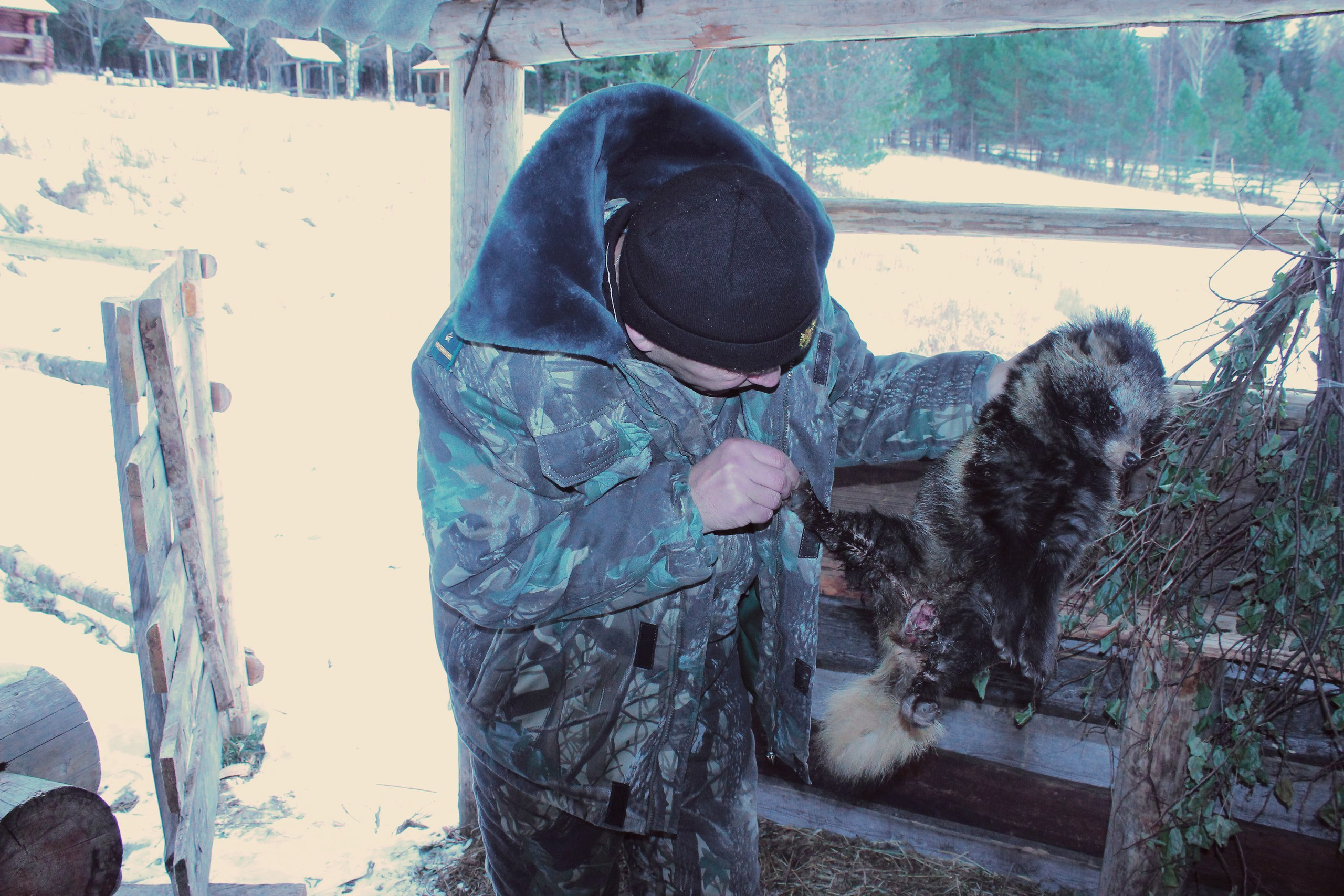 Умирающая отрака енотовидная собачка пришла ксотрудникамНП «Зюраткуль»