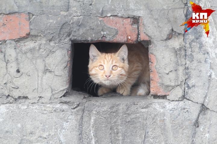 ВИркутском районе мошенники выманили вознаграждение ухозяйки блудного кота