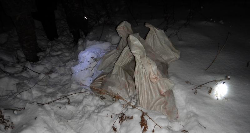 ВЯрославской области задержали браконьеров, застреливших лося