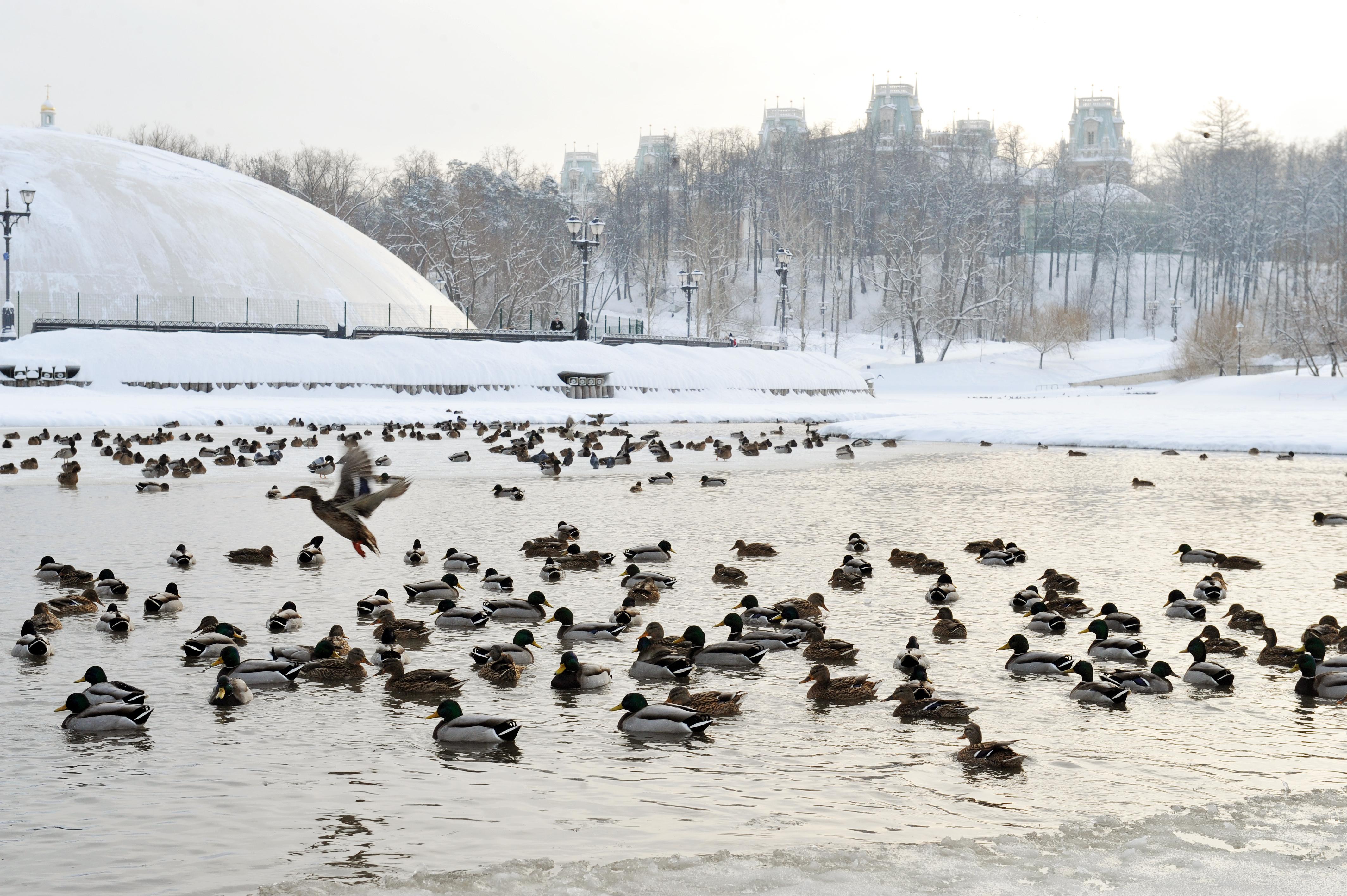 День заповедников инациональных парков РФ  отмечают вПриморье