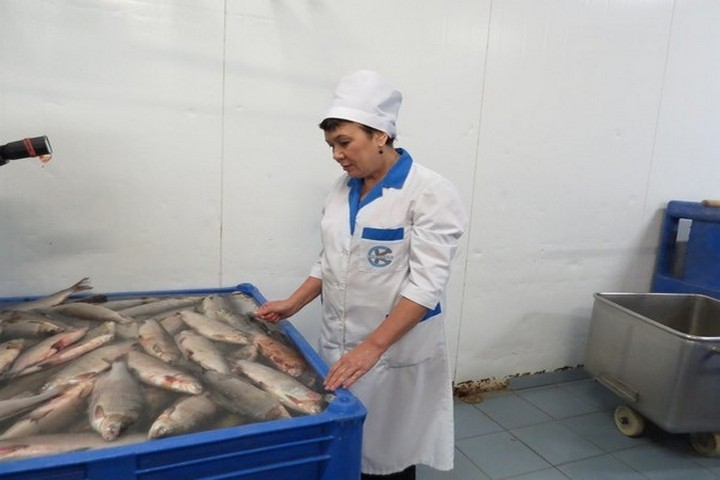 Ямальские рыболовы  установили рекорд повылову рыбы втечении следующего года
