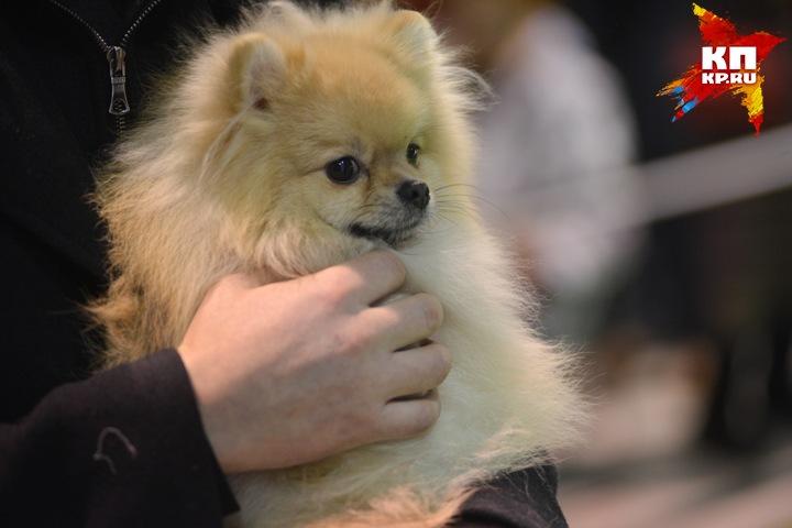 Мошенницы продали амурчанам четырех несуществующих собак