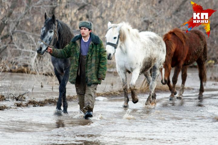 ВОмской области вреку Оша вмерзли 15 лошадей