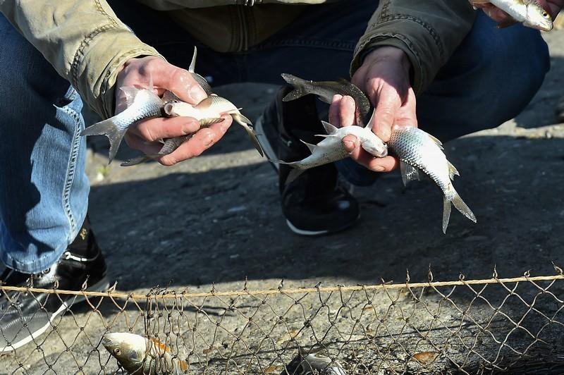 НаКубани ужесточат меры поохране рыбных ресурсов