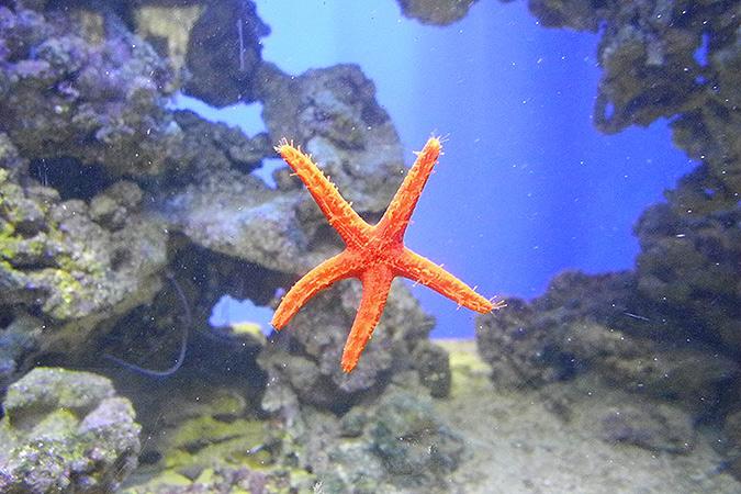 Красная пятиконечная звезда: как это символично, правда? Фото: Ульяна СКОЙБЕДА