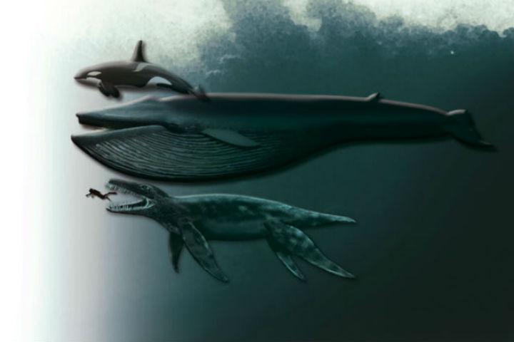 НаШпицбергене отыскали кости неизвестного существа
