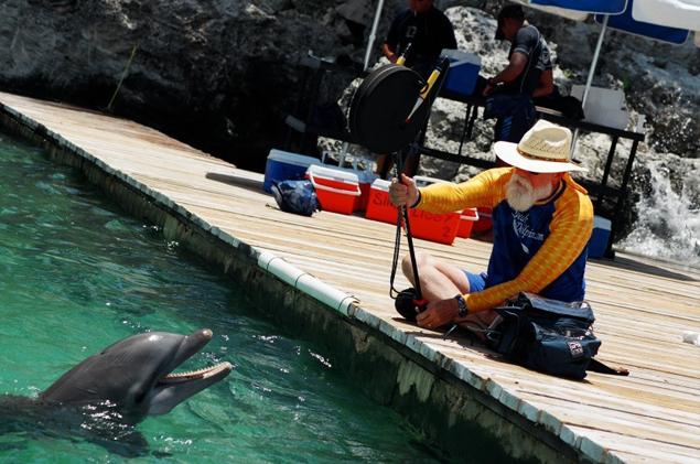 Многие ученые пытаются наладить диалог с дельфинами
