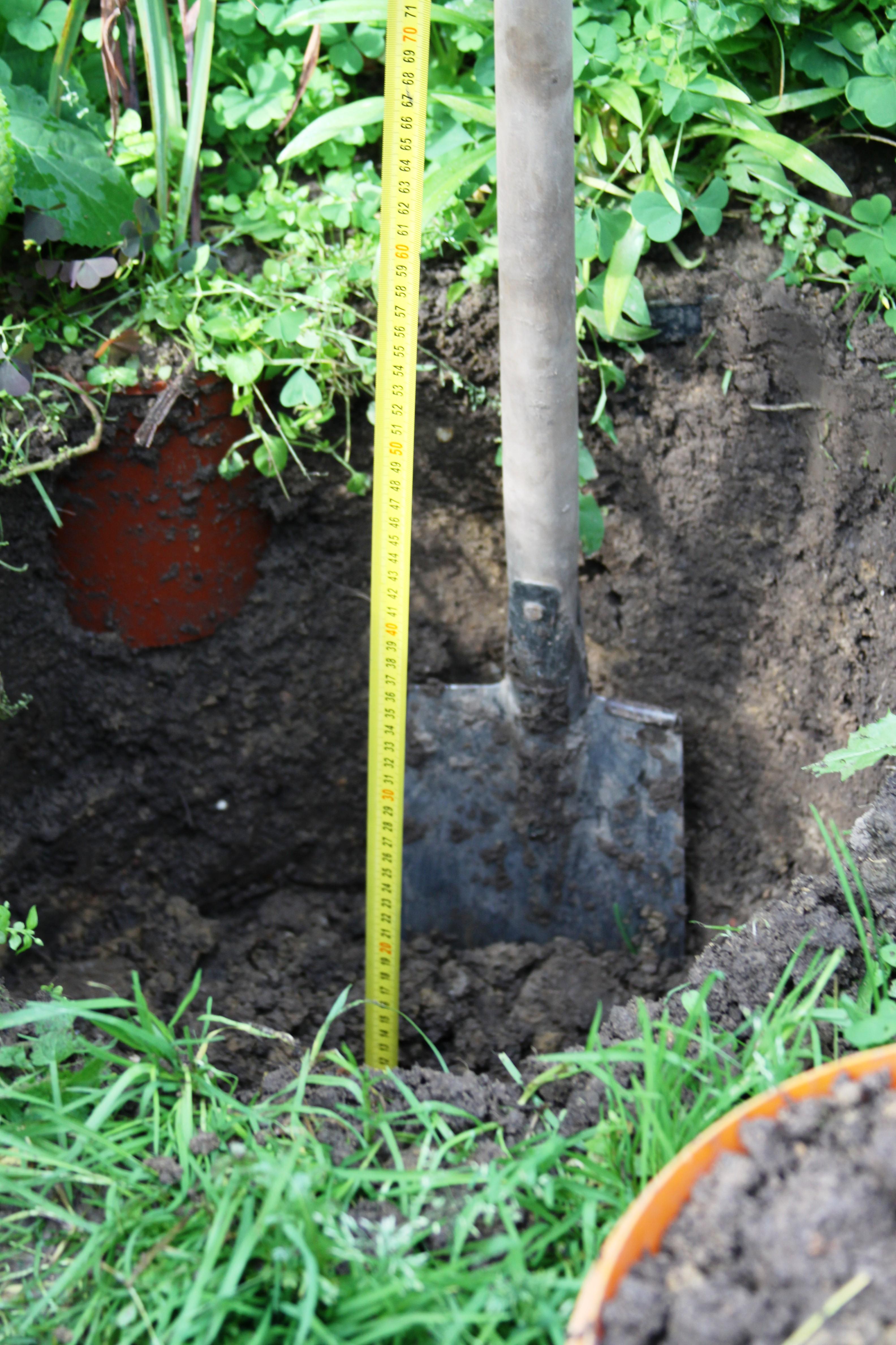 Если вы сажаете пионы надолго, глубина ямы должна быть до 80 см в глубину. Фото: АВТОР
