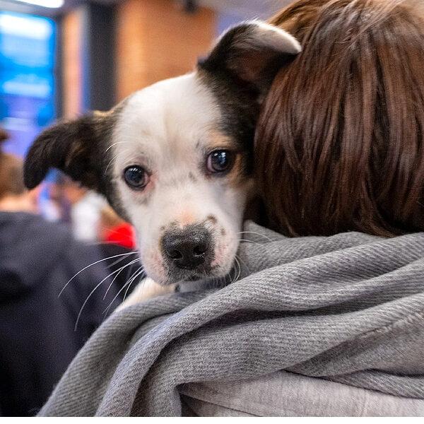 Фестиваль «Собаки, которые любят»