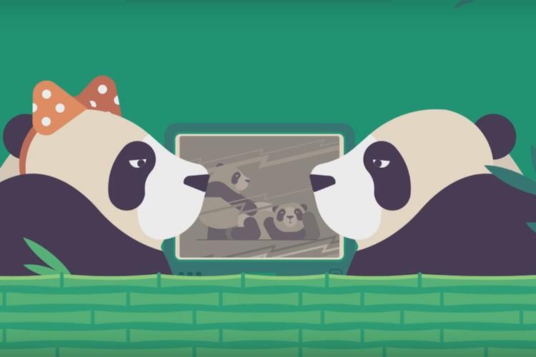 Размножению эти животные обычно предпочитают сон и еду. Однако, насмотревшись на других панд, которые заняты амурными делами, эти зверюшки гораздо охотнее приступают к созданию потомства