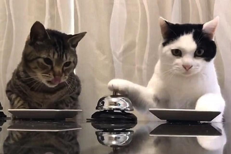 Как проверить слово кота