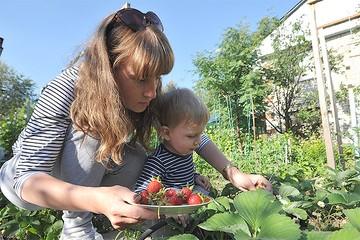 Уход за клубникой в июне на даче: как получить хороший урожай дождливым летом