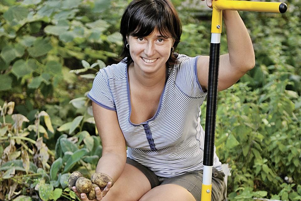 Выкапывать урожай лучше вилами - они не режут клубни, как это делает лопата.