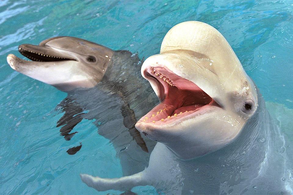Дельфин хочет секса