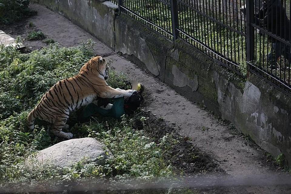 Тайфун повалил работницу зоопарка на землю и лишь благодаря помощи посетителей ей удалось спастись.