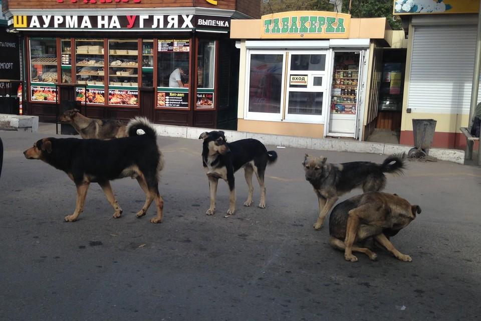 По улицам города бродят около 3 200 бездомных животных.