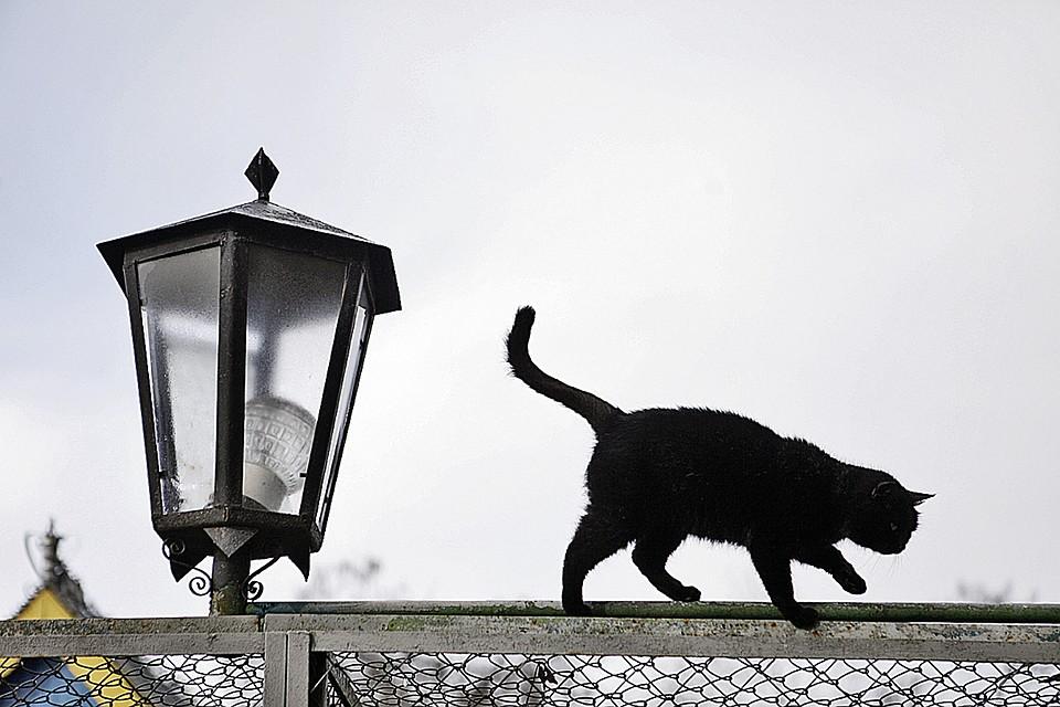Ученые выяснили, чем неудачник отличается от баловня судьбы: Черный кот ни в чем не виноват!