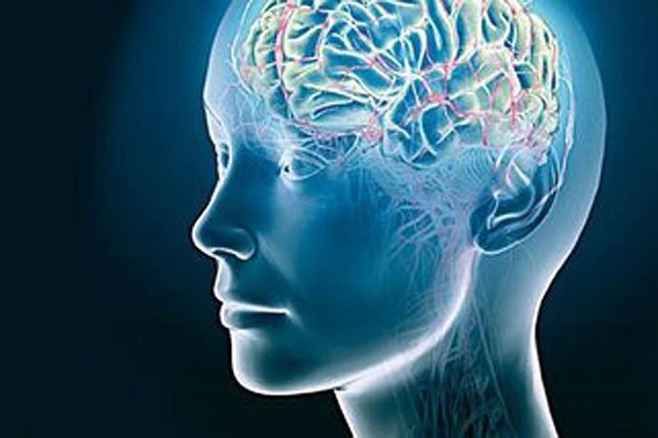 Европейские ученые развеяли миф о безвозвратной утрате нервных клеток