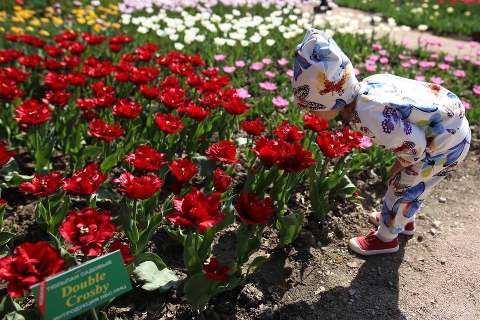 На поляну с тюльпанами подтянулись детки.