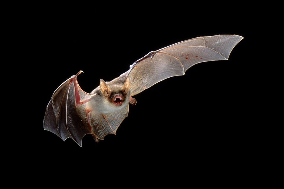 картинки с изображением летучих мышей высотки всегда порождали