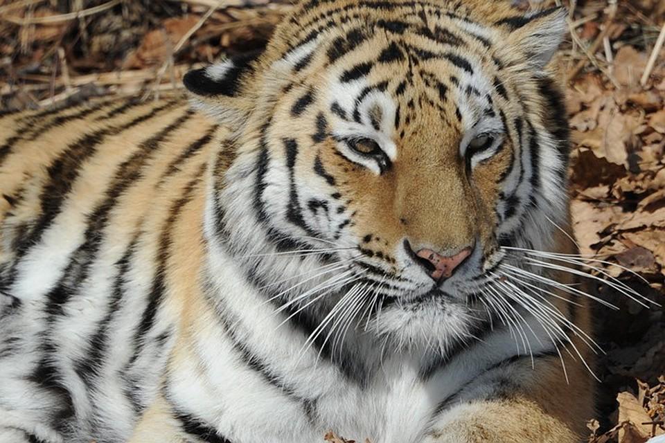 Тигров задачник для
