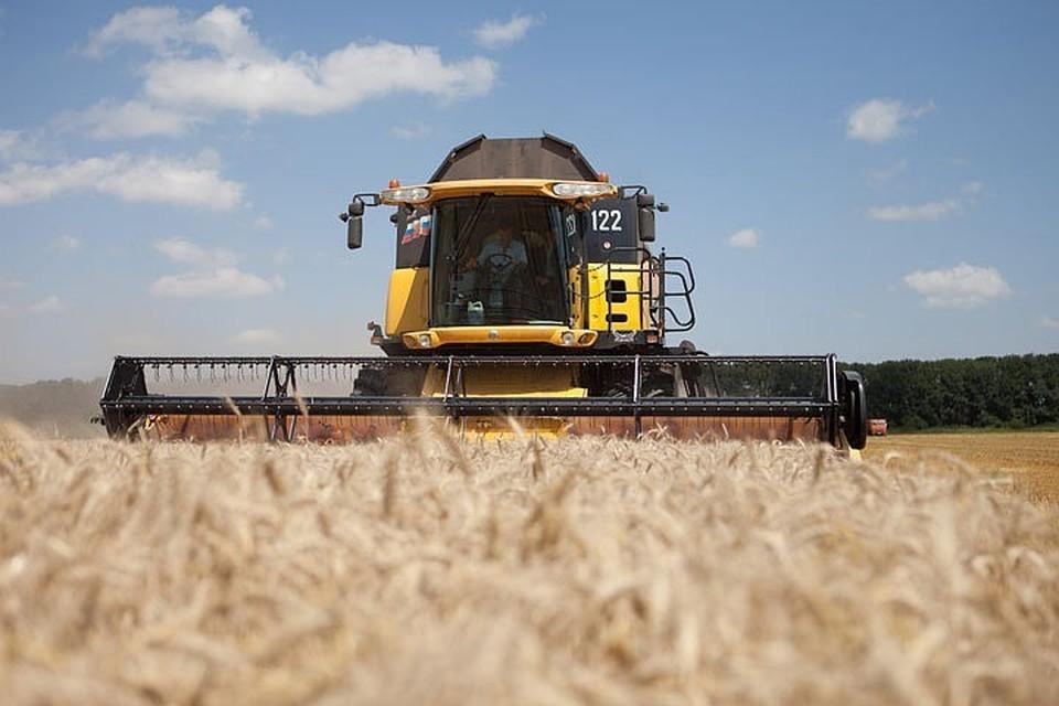 Гидрометцентр предупредил о падении объема урожая зерновых в России