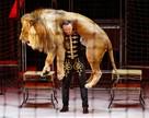 В Петербурге дрессировщик поднимет льва весом в 300 кг