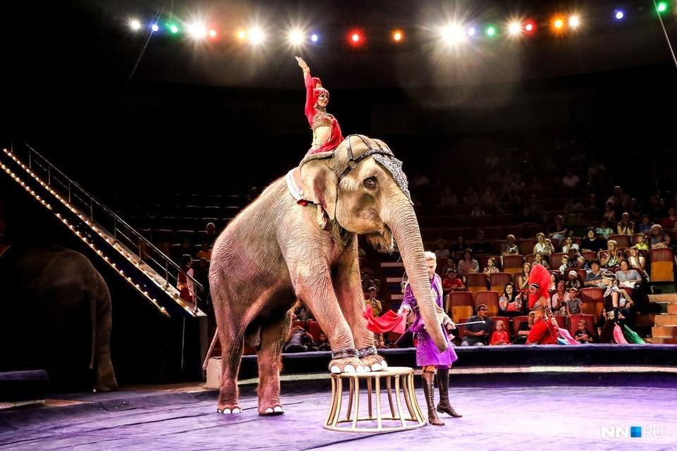 Слоны в Нижнем Новгороде! Все о новом грандиозном шоу в Нижегородском цирке. Фото: СОЦСЕТИ