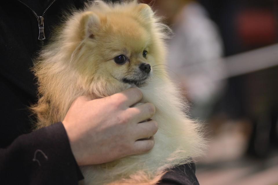 Практически всем собакам необходимо лечение, но отбоя от желающих взять их в семью у волонтеров нет.