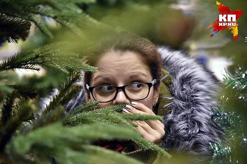 Дороже всех стоят искусственные елки в Москве