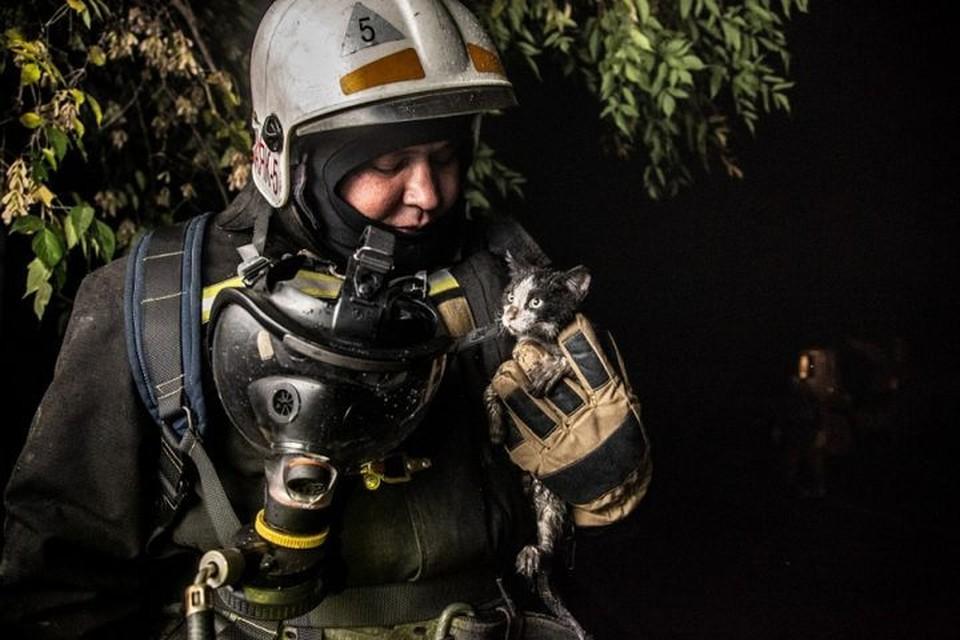 Спасенный котенок стал любимцем пожарных. Фото: Виктор Боровских/ГУ МЧС России по Новосибирской области.