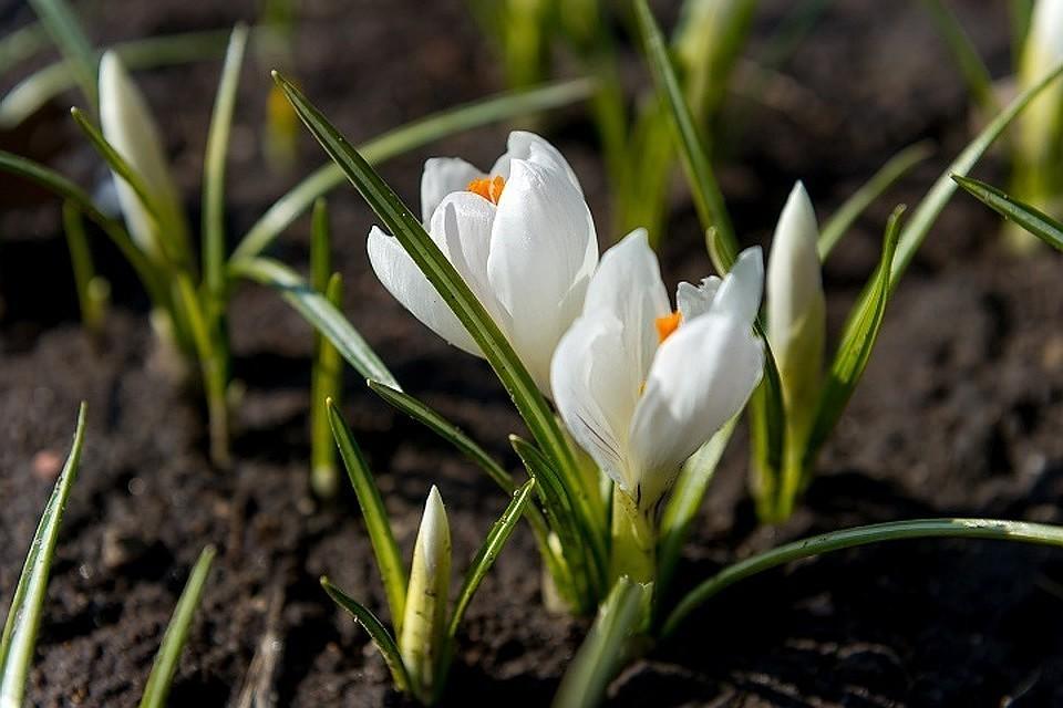 Синоптики рассказали, когда в столицу придет климатическая весна