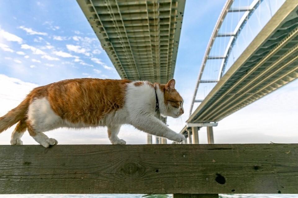 Хвостатый мостостроитель держит стройку по личным контролем. Фото: Кот Моста/VK