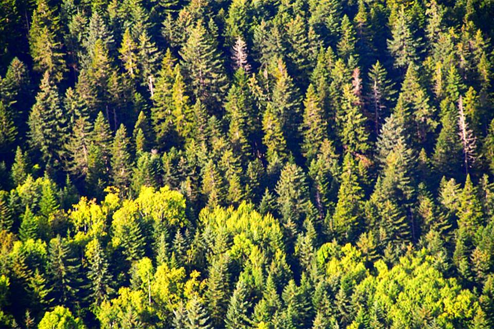 Сергей ИВАНОВ: мы должны четко знать поглощающую способность наших лесов. Фото: Александра КОЗЛОВА