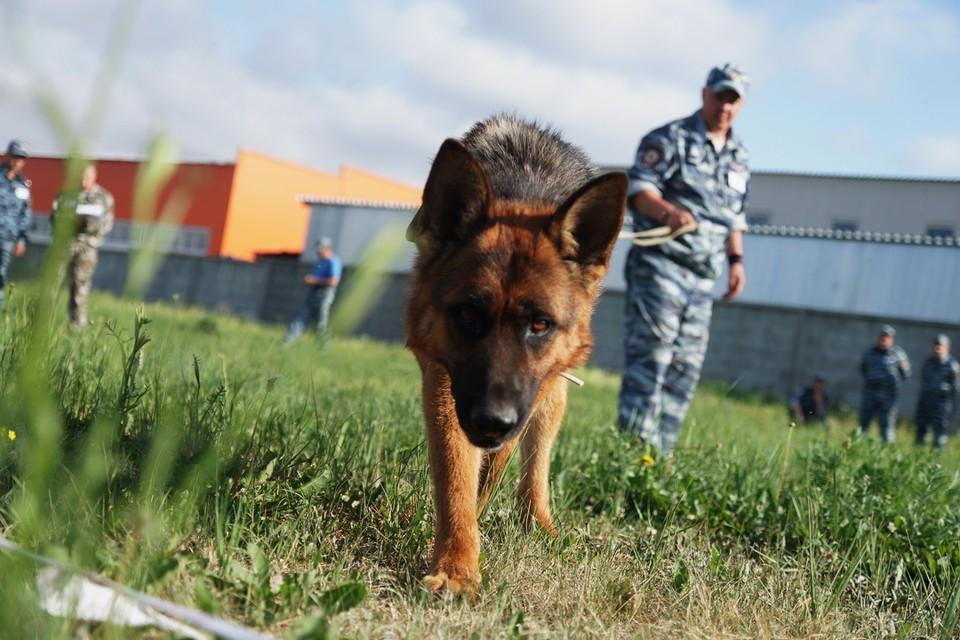 К поискам привлекли кинологов с собаками. Фото: Алексей БУЛАТОВ.