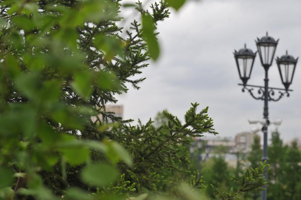 Синоптики предупредили жителей Хабаровского края о неделе гроз, ливней и штормового ветра