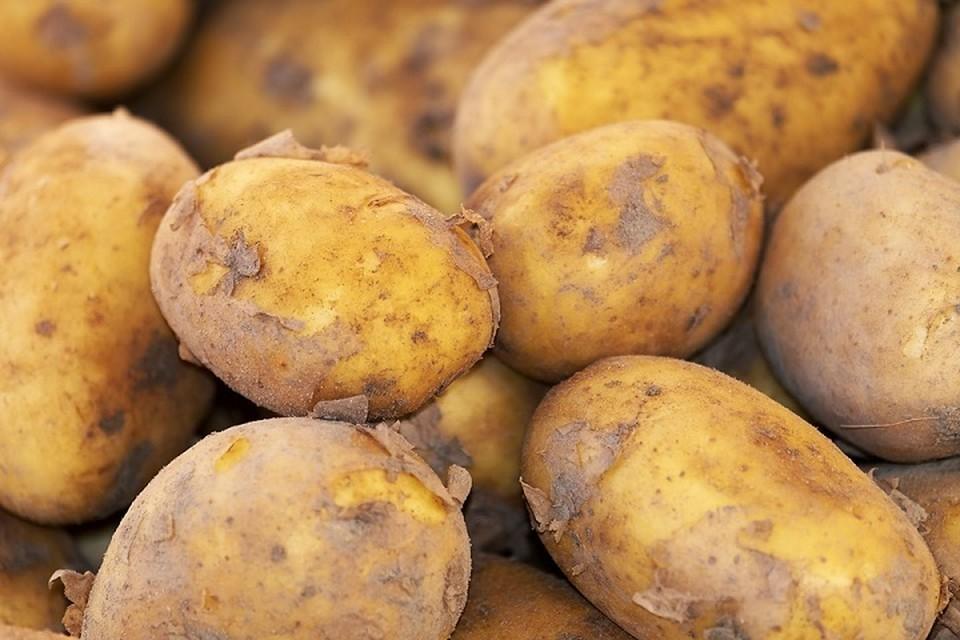 Экспорт картофеля в Молдову увеличился в 320 раз. Фото: pixabay.com.