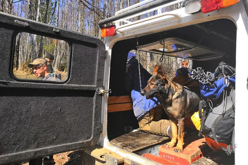 Спасателям помогает немецкая овчарка Зара