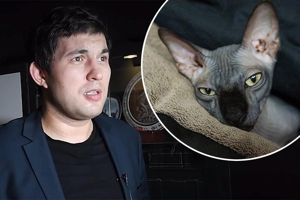 """Сын Бари Алибасова: """"Я вопрос с Чучей буду продолжать решать. Когда найдется именно «наш» кот, то выплачу вознаграждение""""."""