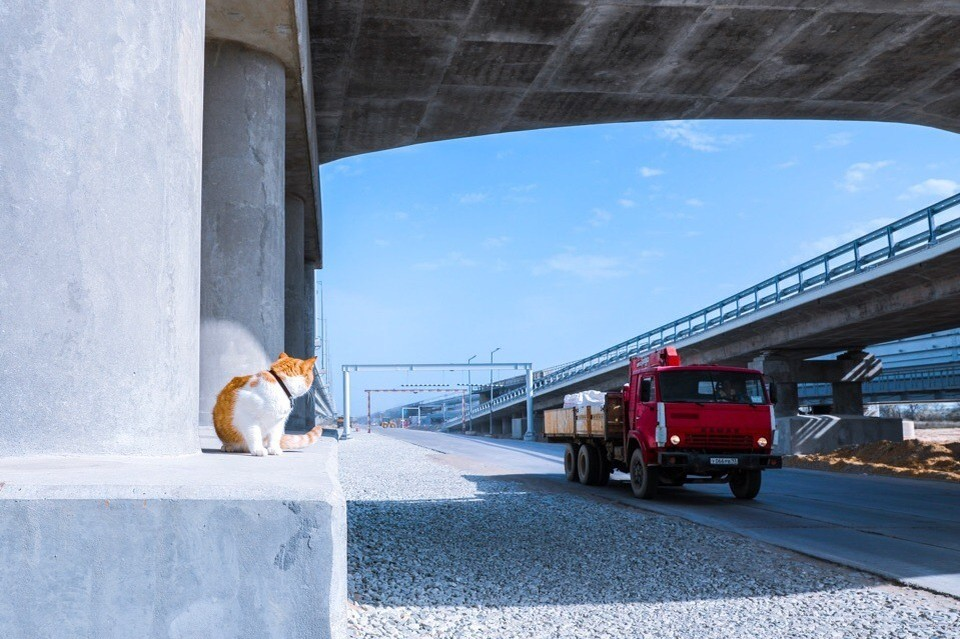 Грузовики притормаживают, завидя кота. Фото: Кот Моста/VK