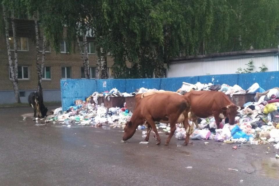 И такая картина на многих улицах города. Фото: группа во ВКонтакте «Гражданский патруль | Аша»