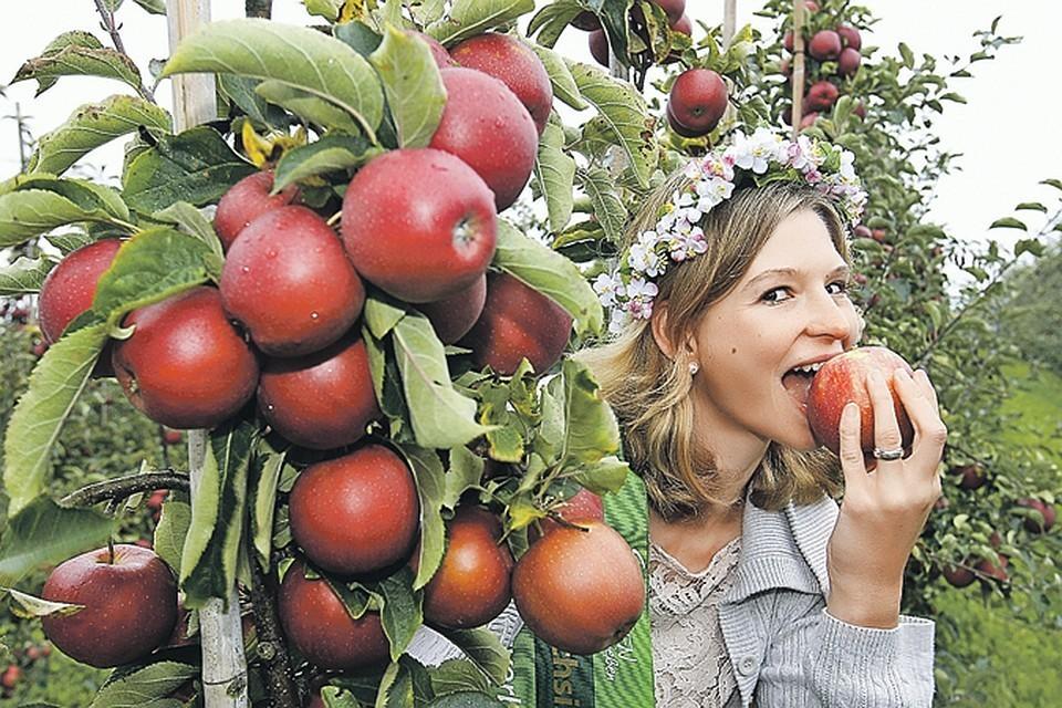Молдавские яблоки приходят по минимальным ценам, конкурировать с ними не возможно.