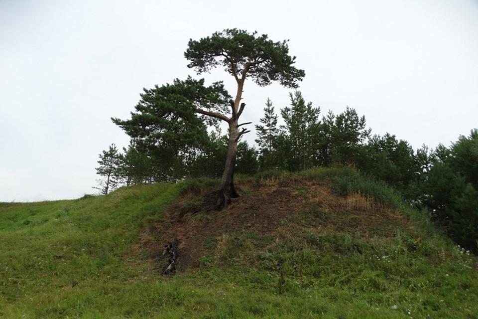 Солнечные орлы выбирают отдельно стоящие деревья