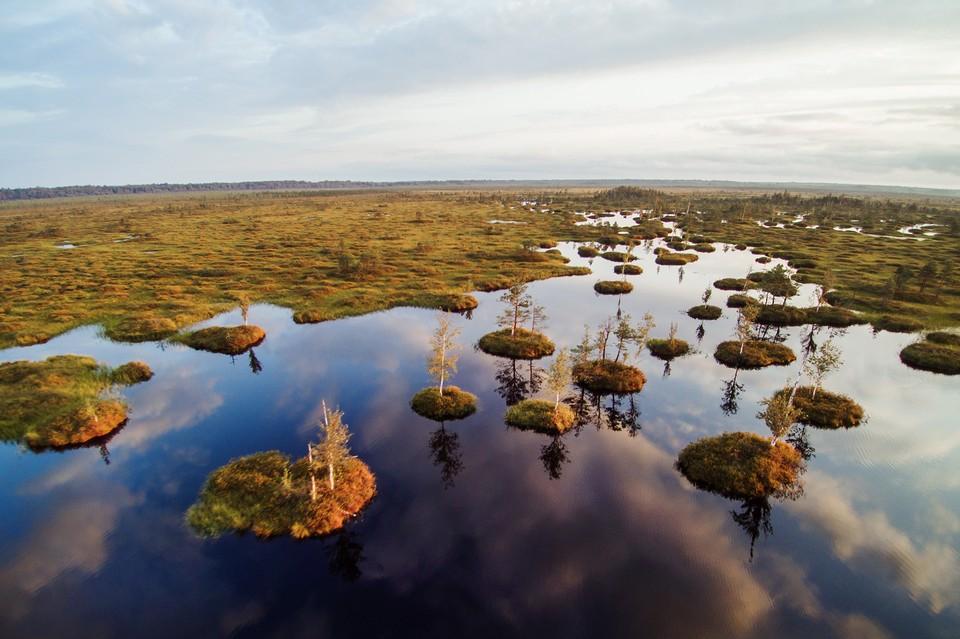 Возраст болота около 9000 лет.