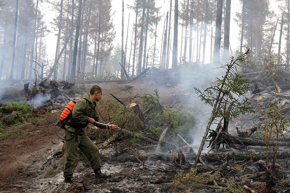 Пожары в Сибири взбудоражили весь мир
