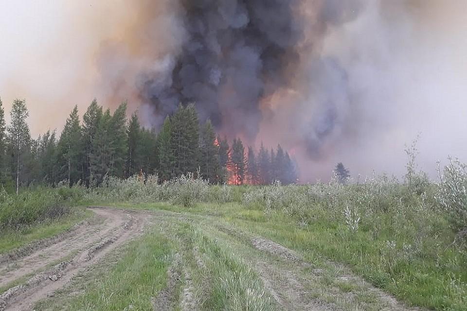 о лесных пожарах в якутии фото как