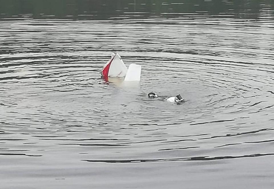 Фото предоставлено МЧС: из воды видно хвостовое оперение вертолета.