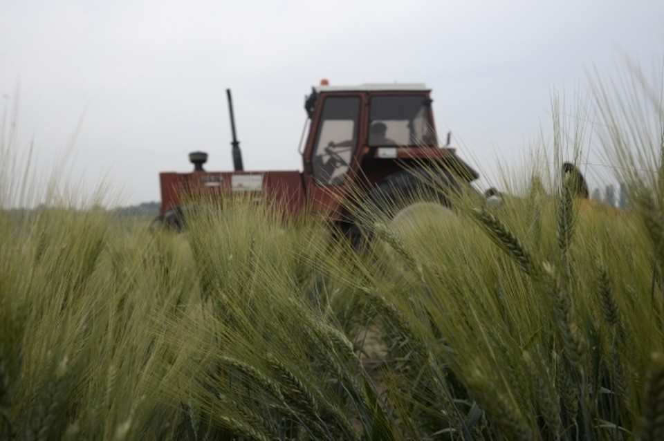 Аграрии в Красноярском крае намолотили больше миллиона тонн зерна